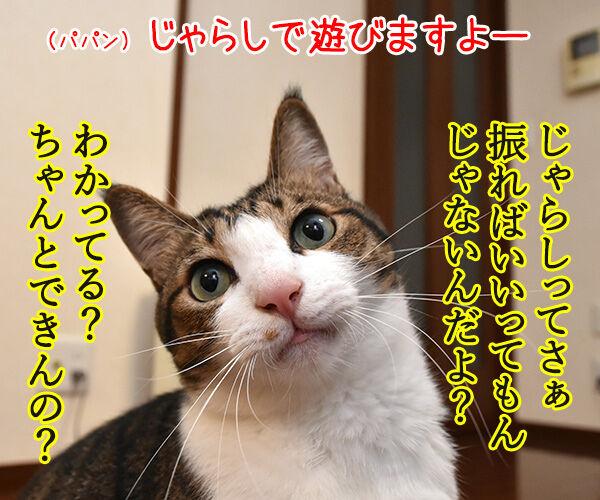 けっきょく… こうなる… 猫の写真で4コマ漫画 1コマ目ッ