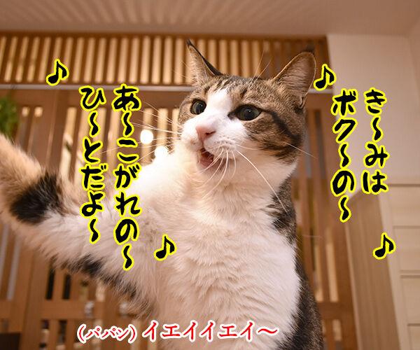 『夏のお嬢さん』はチュウ チュウチュチュなのッ 猫の写真で4コマ漫画 3コマ目ッ