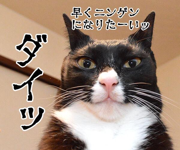 妖怪人間アズダイパパン 猫の写真で4コマ漫画 3コマ目ッ