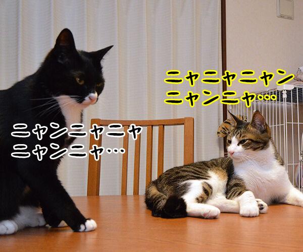 ニャニャニャ 猫の写真で4コマ漫画 3コマ目ッ