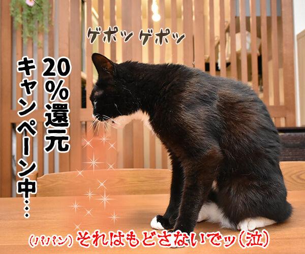 LINE Payも20%還元キャンペーンなんですってッ 猫の写真で4コマ漫画 4コマ目ッ