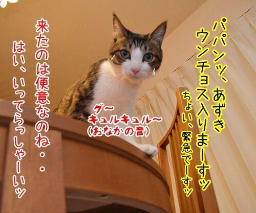 来たなッ 猫の写真で4コマ漫画 2コマ目ッ
