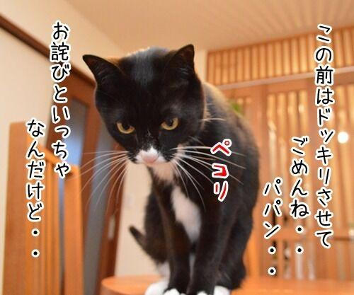 お詫びにかえて 猫の写真で4コマ漫画 1コマ目ッ