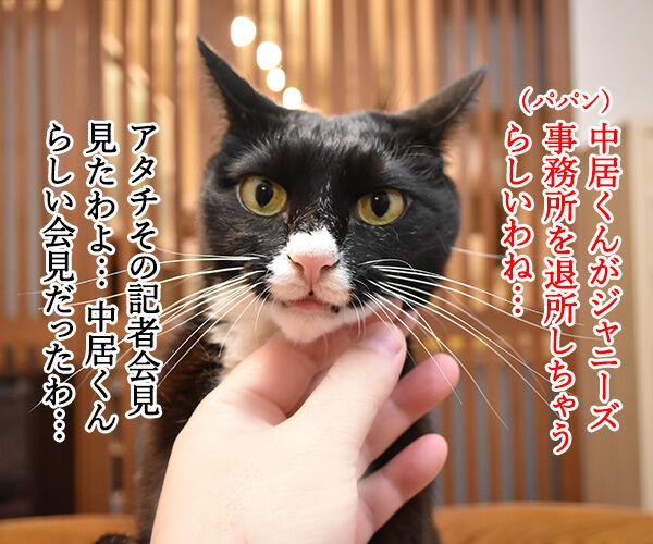 中居くんがジャニーズ事務所を退所しちゃうのよッ 猫の写真で4コマ漫画 1コマ目ッ
