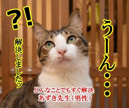 どんなことでもすぐ解決 猫の写真で4コマ漫画 3コマ目ッ