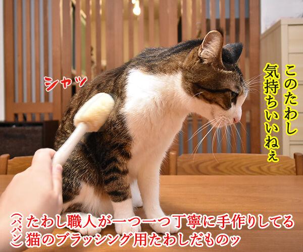 猫用たわしでブラッシングしたら? 猫の写真で4コマ漫画 1コマ目ッ