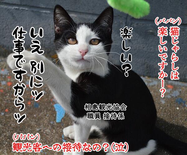 猫島 其の六 猫の写真で4コマ漫画 4コマ目ッ