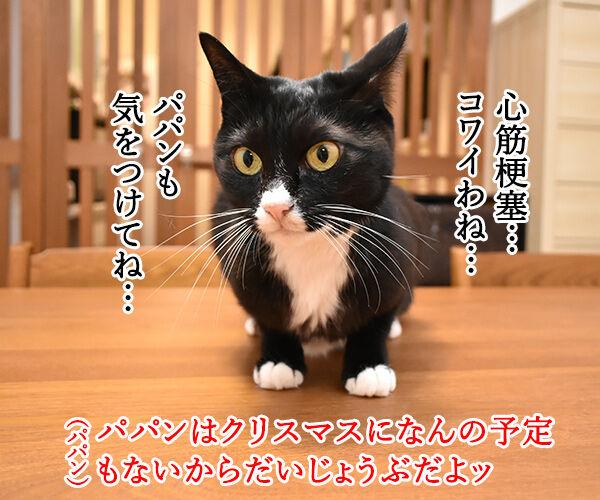 イブの夜10時は心筋梗塞の発作ピークなんですってッ 猫の写真で4コマ漫画 3コマ目ッ