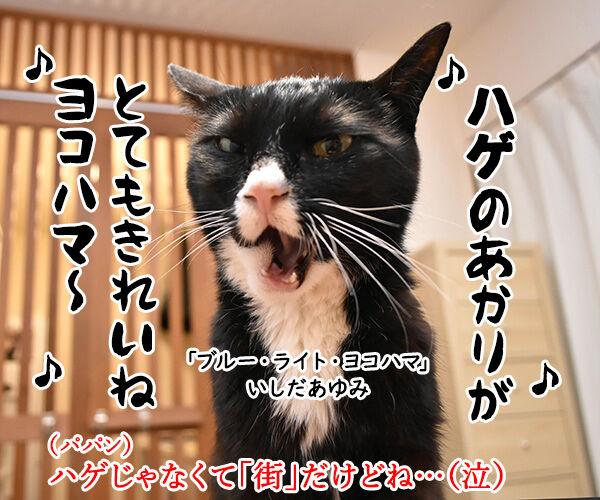 横浜の夜景ってキレイだよねッ 猫の写真で4コマ漫画 3コマ目ッ