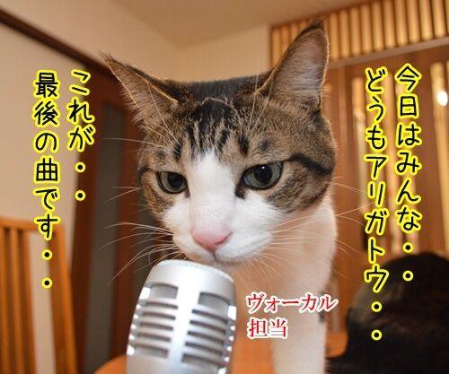 ライブハウス パパンちにようこそッ 猫の写真で4コマ漫画 2コマ目ッ