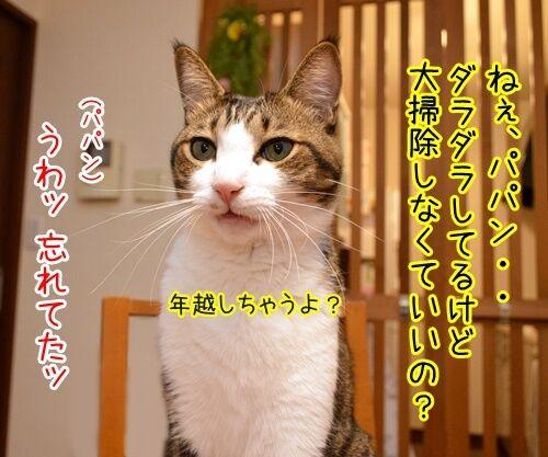 今年の汚れ、今年のうちに 猫の写真で4コマ漫画 1コマ目ッ