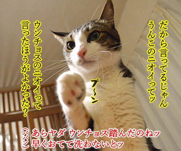 クサイ理由 猫の写真で4コマ漫画 3コマ目ッ
