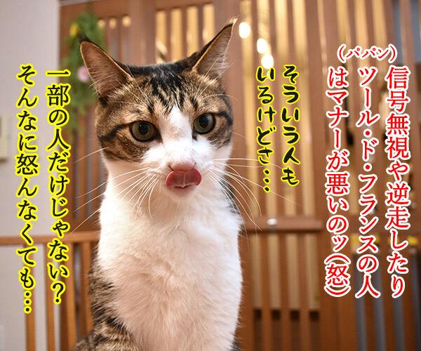 ツール・ド・フランスのヒト 猫の写真で4コマ漫画 2コマ目ッ