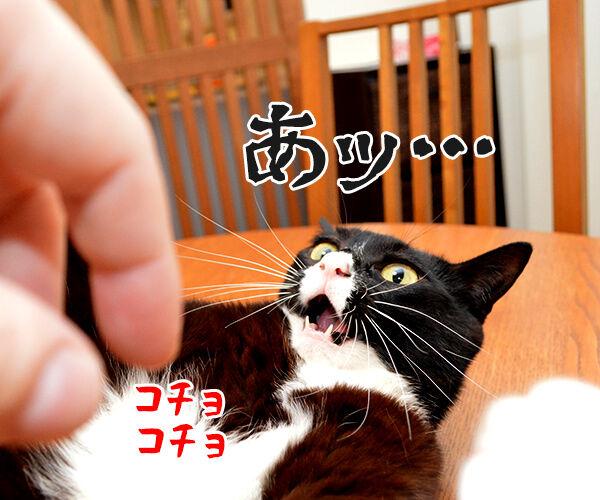 ちょっと待ってッ!! 猫の写真で4コマ漫画 3コマ目ッ