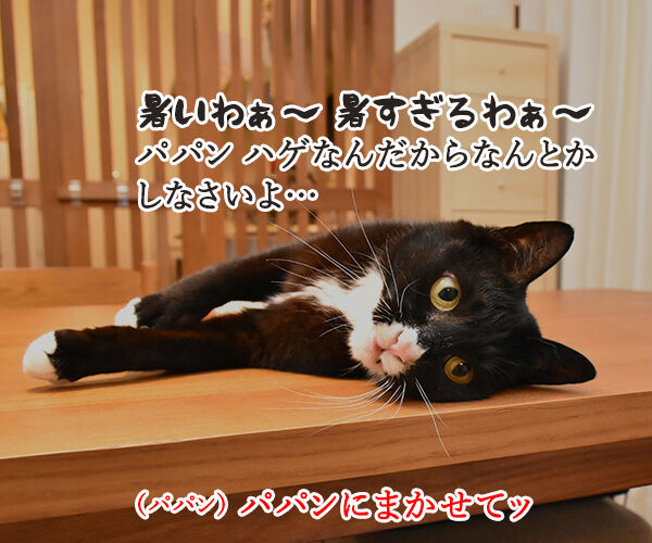 これって暑いときの猫さんあるあるかしら? 猫の写真で4コマ漫画 1コマ目ッ