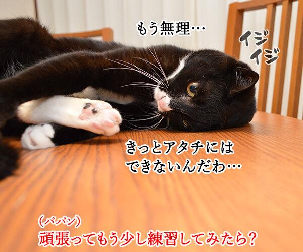 エビキャッチ 其の三 猫の写真で4コマ漫画 2コマ目ッ