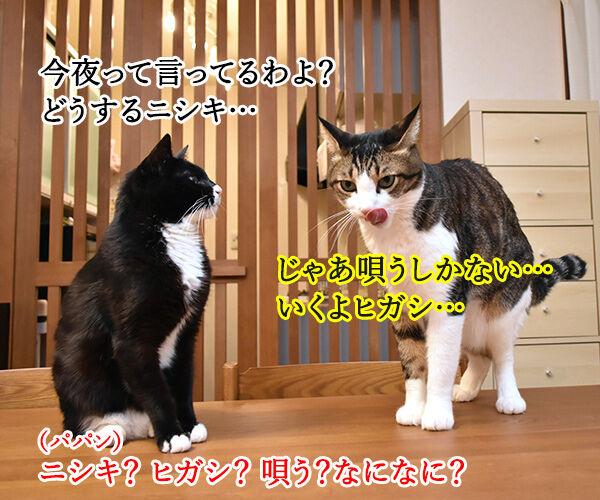 オヤツは今夜じゃイヤなのよッ 猫の写真で4コマ漫画 2コマ目ッ