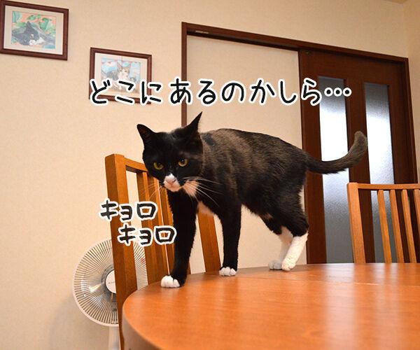 さがしもの 猫の写真で4コマ漫画 1コマ目ッ