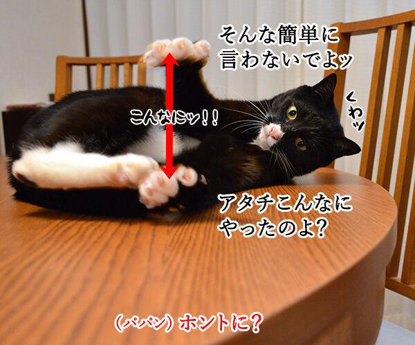 エビキャッチ 其の三 猫の写真で4コマ漫画 3コマ目ッ