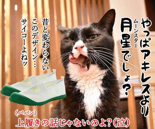 予言猫アキレスはW杯開幕戦を見事的中なのッ 猫の写真で4コマ漫画 4コマ目ッ
