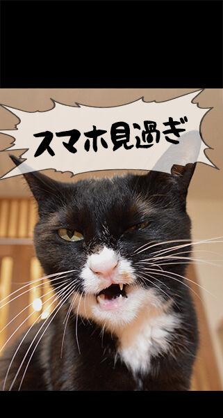 猫に叱られたい人のためのロック画面なのッ 猫の写真で4コマ漫画 ロック画面1