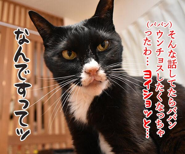 台風の影響で大規模な計画運休なのよッ 猫の写真で4コマ漫画 3コマ目ッ