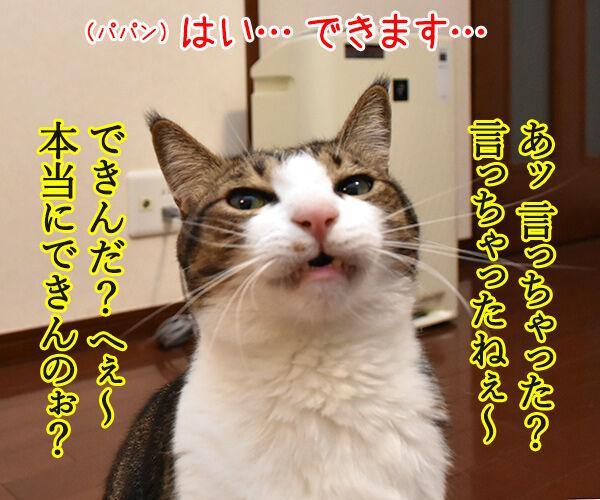 けっきょく… こうなる… 猫の写真で4コマ漫画 2コマ目ッ