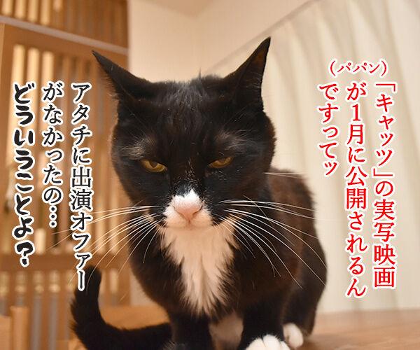 大ヒットミュージカル「キャッツ」が実写映画化なのよッ 猫の写真で4コマ漫画 1コマ目ッ