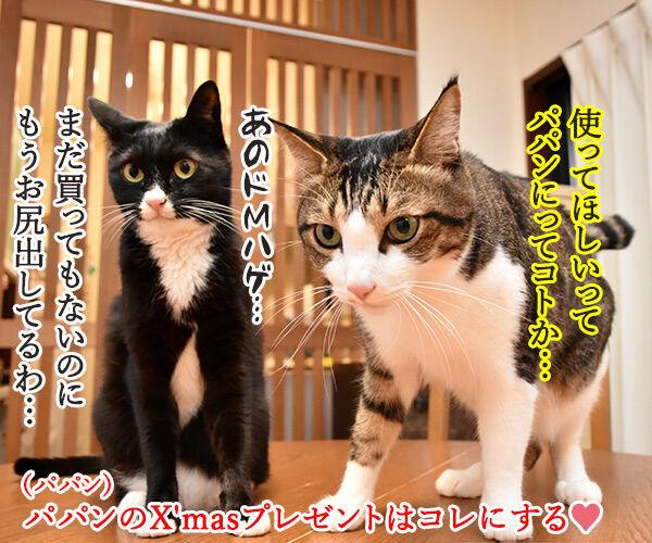 どうしても使ってほしいじゃらしがあるのッ 猫の写真で4コマ漫画 4コマ目ッ