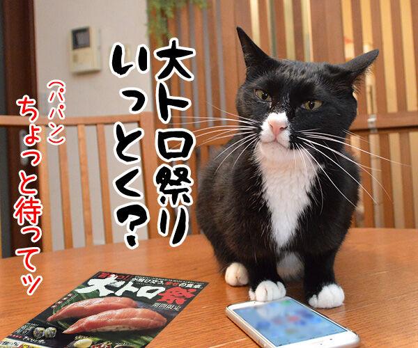 パパン なんだかお寿司が食べたいわぁ~ 猫の写真で4コマ漫画 2コマ目ッ