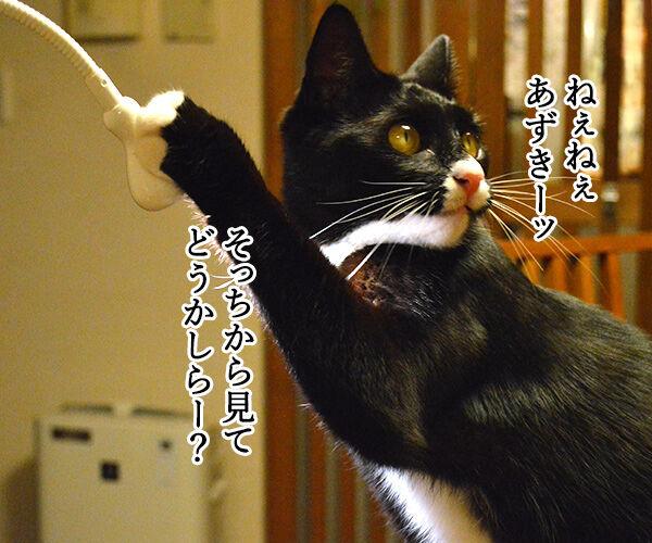 職業:女優 猫の写真で4コマ漫画 3コマ目ッ
