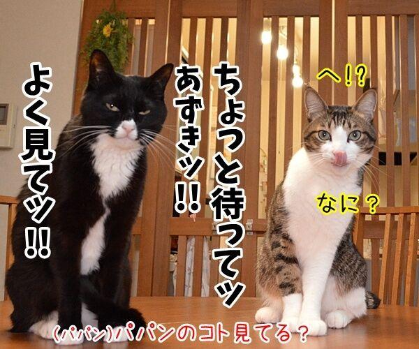 辞職ッ それッ 辞職ッ 猫の写真で4コマ漫画 3コマ目ッ