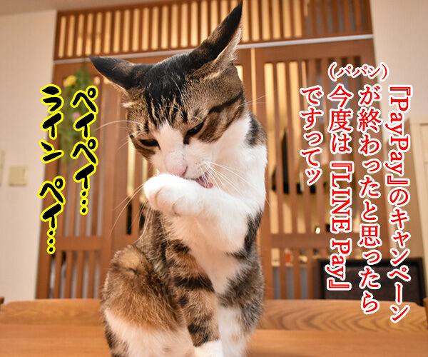 LINE Payも20%還元キャンペーンなんですってッ 猫の写真で4コマ漫画 1コマ目ッ