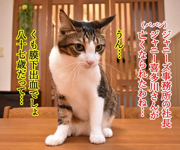 ジャニー喜多川さんのご冥福を心よりお祈り申し上げます 猫の写真で4コマ漫画 1コマ目ッ