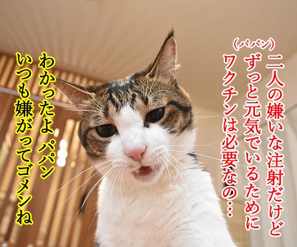 猫カフェでパルボウィルス感染して臨時休業なんですってッ 猫の写真で4コマ漫画 3コマ目ッ