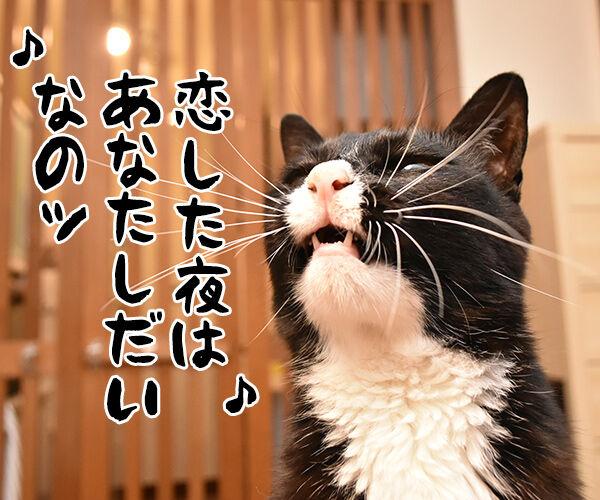 ♪うわさを信じちゃいけないよッ 猫の写真で4コマ漫画 2コマ目ッ