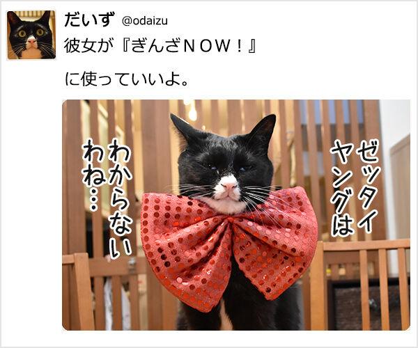 『~なう。に使っていいよ。』ってやってみたのッ 猫の写真で4コマ漫画 4コマ目ッ