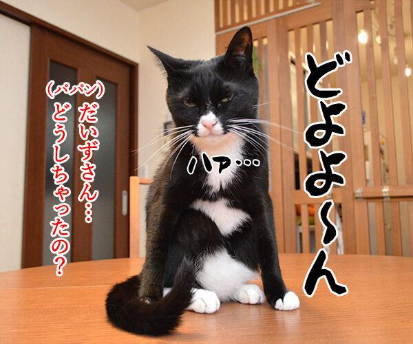 五月だから 猫の写真で4コマ漫画 2コマ目ッ