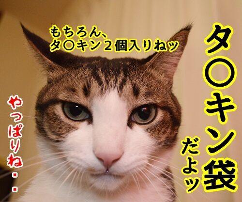 お正月といえば福袋 猫の写真で4コマ漫画 4コマ目ッ