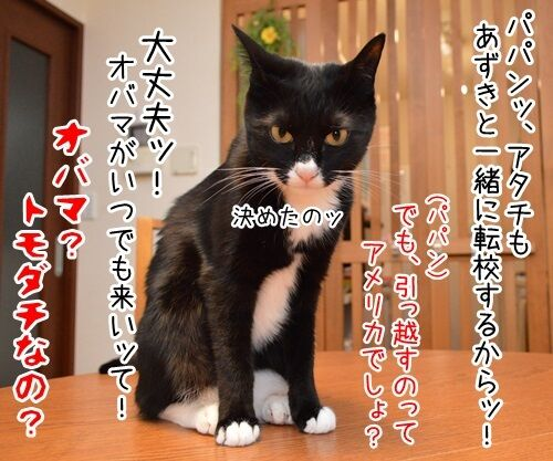 突然の別れ 猫の写真で4コマ漫画 4コマ目ッ