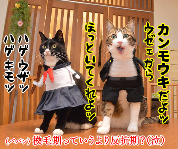 ブラッシングさせてちょうだいッ 猫の写真で4コマ漫画 4コマ目ッ