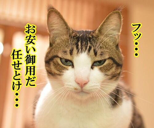パパンが調子わるいとき 猫の写真で4コマ漫画 3コマ目ッ