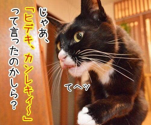 ちょっと奥さん、聞いたぁ? 猫の写真で4コマ漫画 3コマ目ッ