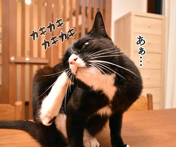 お耳の中がかゆいのよッ 猫の写真で4コマ漫画 2コマ目ッ