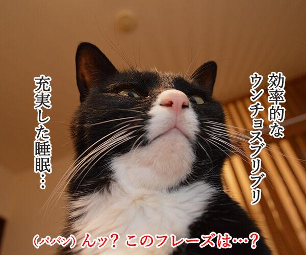 『ブルゾンちえみ』猫バージョン??? 猫の写真で4コマ漫画 1コマ目ッ