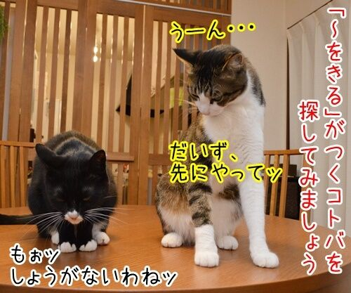 国語の授業 其の二 猫の写真で4コマ漫画 1コマ目ッ