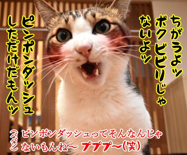 ビビリで人見知りなあずきさんは… 猫の写真で4コマ漫画 4コマ目ッ