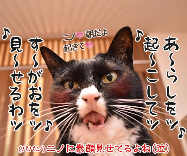 春の嵐がまたくるんですってッ 猫の写真で4コマ漫画 4コマ目ッ