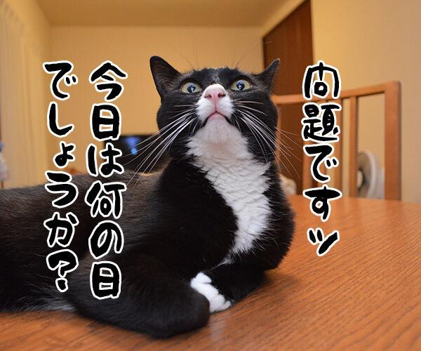 今日は何の日でしょうかッ? 猫の写真で4コマ漫画 1コマ目ッ