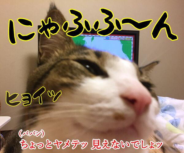 テレビが見えないから 猫の写真で4コマ漫画 3コマ目ッ